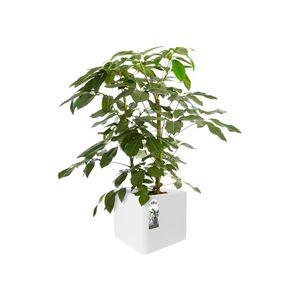 Elho Greenville Rund 30 - Blumentopf - Laubgrün - Außen - Ø 29.5 x H 27.8 cm