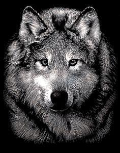 """Kratzbild """"Wolf"""", Silber, 11 x 18 cm"""