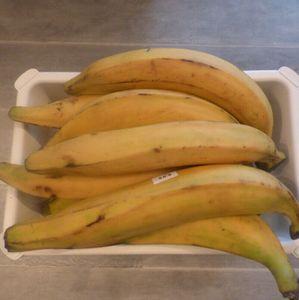Frische Gelb  Kochbananen Plantains 1kg!!