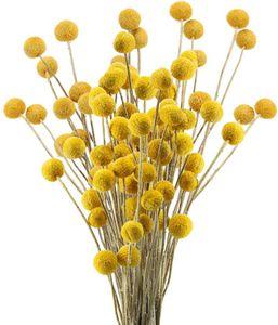 30pcs Getrocknete Blumen Echte Natürliche Künstliche Blumen Craspedia Globosa Kunstblumen Trockenblumen
