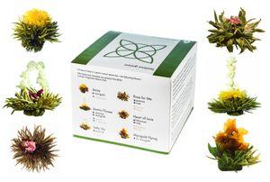 6er Probier-Box Grüntee-Teeblumen Feelino green mit 6 verschiedenen Teekugeln