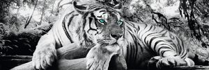 Tiger is watching you Langbahnposter - Langbahnposter