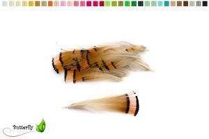 20 Goldfasan Federn ca. 4-8cm orange