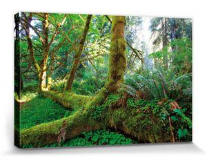Wälder Poster Leinwandbild Auf Keilrahmen - Riesen-Wurzeln Im Regenwald (20 x 30 cm)