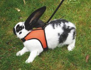 Nagergeschirr Sport mit Leine 120 cm verstellbar Kaninchen