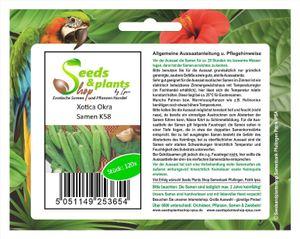120x Xotica Okra - Okra Samen Pflanze Garten Saatgut Gemüse K58