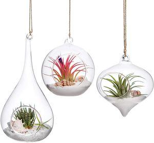3 Pack Glas hängender Pflanzer Air Fern Holder Terrarium Pflanzen Kleiderbügel Vase Home Decoration Xmas Gift for Succulent Moss Tillandsias Air Plants