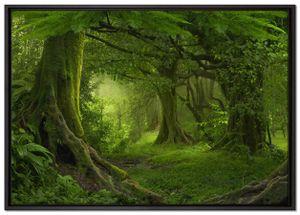 Dschungel im Regenwald Leinwandbild 100x70 cm im Bilderahmen   Wandbild    Schattenfugenrahmen   Kein Poster