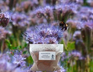 Phacelia Bienenfreund Gründüngung Frische Saat Mantelsaat® 2 kg Samen