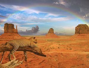hansepuzzle 59768 Natur - Wüste, 1000 Teile
