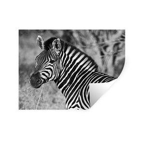 Wandaufkleber - Zebra Porträt - 80x60 cm - Repositionierbar