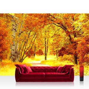Vlies Fototapete no. 0079 - 350X245 cm - Autumn Leaves Wald Tapete Herbstblätter Wald Bäume Baum Forest Herbst braun liwwing (R)