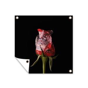 Gartenposter - alt-Platzhalter: flowers-eb_XMV0lpHMQig6agMd_medium.png - 100x100 cm