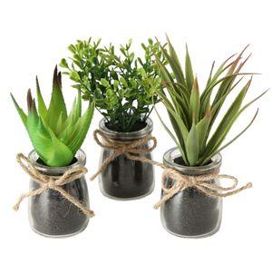 Topfpflanze Sukkulente - im Glas - 3er Set