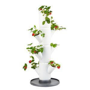 SISSI STRAWBERRY starter  - Erdbeerbaum - Pflanzgefäß/Topf/Pflanzturm