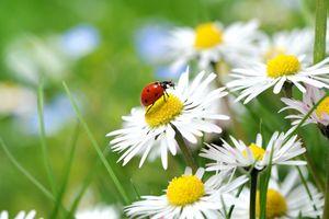 4x Tischsets Motiv 'welcome spring' / abwaschbar