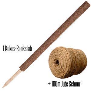 Kokos-Rankstab Länge 80cm Ø 4cm + 100m Jute
