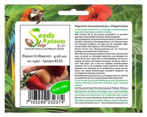 100x Riesen Erdbeeren Groß wie ein Apfel Obst Pflanzen - Samen #155