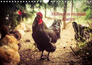 Calvendo Wandkalender Hühner in meinem Garten (Wandkalender 2021 DIN A4 quer) 2021 DIN A4