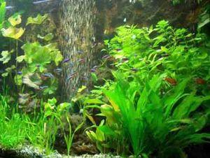 30 Aquarienpflanzen und 1000 ml Flockenfutter