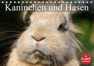 Calvendo Wandkalender Kaninchen und Hasen (Tischkalender 2021 DIN A5 quer) 2021 DIN A5