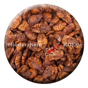 KENKOU® Seidenraupen - Koifutter - | 1,5 kg | Reptilienfutter |