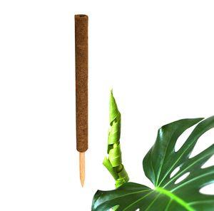 1x Kokos Pflanzstab 60 cm Rankstab Rankhilfe