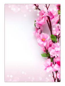 Motiv Briefpapier (Kirschblüten-5187, DIN A4, 100 Blatt) Motivpapier schöne weiß-rosa Blüten des Kirschbaums