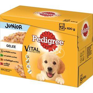 Pedigree Portionsbeutel Junior in Gelee im Multipack 12x100g