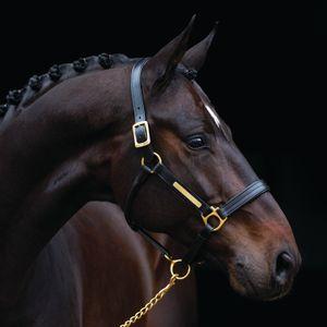 Horseware Amigo Lederhalfter - black, Größe:Vollblut (M)