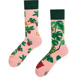 Many Mornings Plant Lover Socken Musterung, Größe:39-42