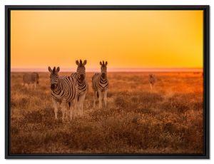 Zebra in der Savanne Leinwandbild 80x60 cm im Bilderahmen / Wandbild  / Schattenfugenrahmen / Kein Poster