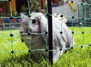 Kaninchennetz 25 mtr. Grün 65 cm, Einzelspitz