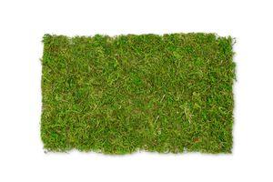 Moos Platten natur 50g | Plattenmoos | Lappenmoos | Deko Moos | Bastel Moos | Natur Moos | Getrocknetes Moos