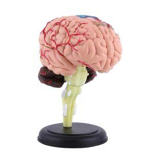 Human Anatomy montierte medizinisches Modell Gehirn-Modell der Struktur des Gehirns Modell