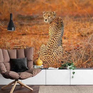 A.S. Création Vlies Fototapete Leopard Leopard Safari DD118918 Tiere Designwalls