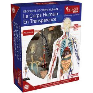 MGM - Explora - Transparente Anatomie des menschlichen Körperskeletts - Anatomieexperiment