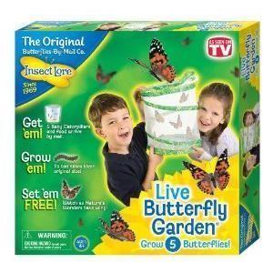 BUKI Schmetterlingszucht