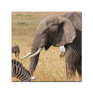 Leinwandbild - Afrika ( Zebra und Elefant), Größe:80 x 80 cm