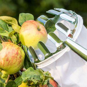 Obstpflücker Stahl verzinkt 16cm ohne Stiel Apfelpflücker Obsternter Birnen