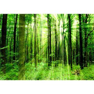 Fototapete Sunlight Forest Wald Tapete Wald Bäume Sonnenstrahlen grün Ruhe grün   no. 61, Größe:350x245 cm, Material:Fototapete Vlies - PREMIUM PLUS