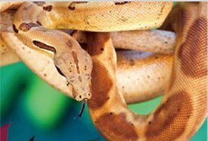 3 D Ansichtskarte Schlange, braun , Postkarte Wackelkarte Hologrammkarte Tiere Schlangen