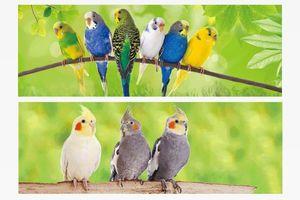 1x 3D Lesezeichen Sittiche 15x5cm Tiere Wackelbild Wackelkarte Buchzeichen Bookmark Bücher Buch Vögel