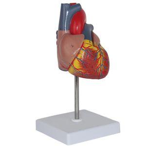 Emulation Herz Gro?e Anatomischen Wirkung Anatomie Eingeweide Medizinische Modelle
