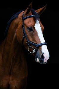 Horseware Rambo Micklem Deluxe Competition Trense Vollblut schwarz