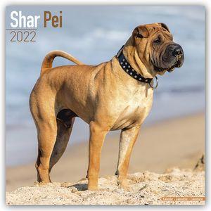 Shar Pei - Shar-Pei 2022 - 16-Monatskalender
