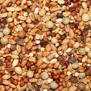 25kg Kampol K - Taubenfutter für Kurzschnäbler und kleine Rassen