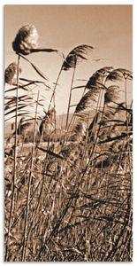 ARTland Alubilder Sepia Gräser II Alubild Größe: 30x60 cm