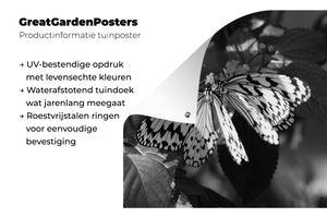 Gartenposter - Zwei Idee leuconoe Schmetterlinge auf orange Blumen - schwarz und weiß - 100x100 cm