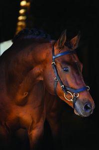 Horseware Rambo Micklem Multi Trense Warmblut schwarz